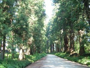 日光杉並木街道 杉並木公園