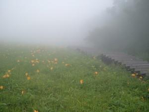 日光霧降高原キスゲ平