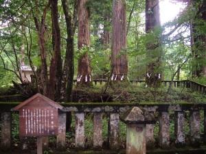 滝尾古道|御神木 三本杉